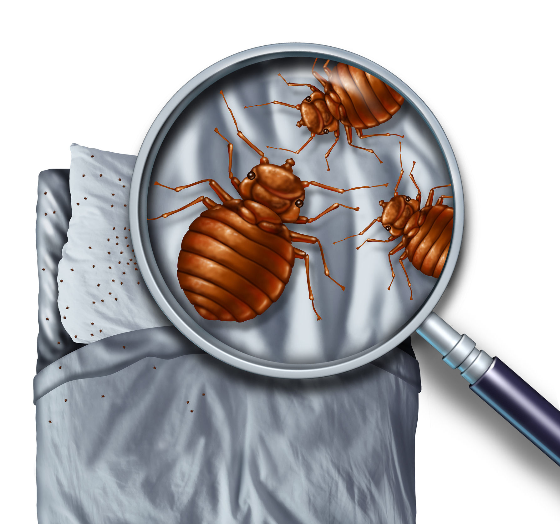 Bed Bugs Winnipeg Guaranteed Bed Bugs Removal In Winnipeg Responders